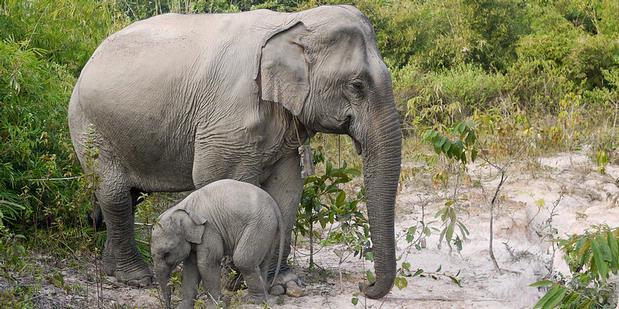 50 Gajah Mabuk Serbu Desa di India