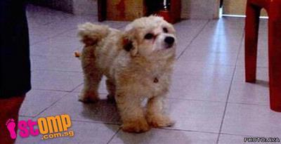 Lempar Anjing dari Apartemen, Dipenjara 5 Minggu