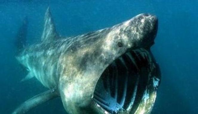 Serangan hiu ditangkal dengan jurus taekwondo