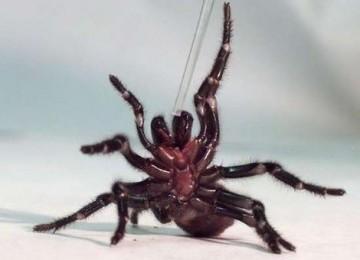 Hii...Laba-laba Ini 'Nginap' di Telinga Hingga Lima Hari