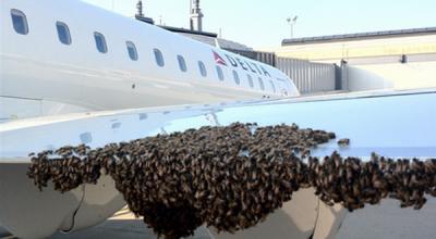 Ulah segerombolan lebah yang hinggap di sayap pesawat terbang delta