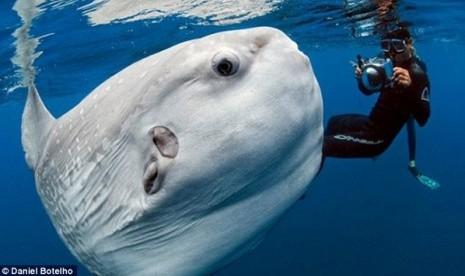 Coba Tebak, Ini Monster Laut atau Ikan?