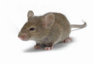 http://2.bp.blogspot.com/-JIGYsCyI7vM/T-sjJ7XVrdI/AAAAAAAAD6c/y0AG7rN3wQE/s400/tikus1.jpg
